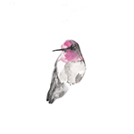 anna_hummingbird_post
